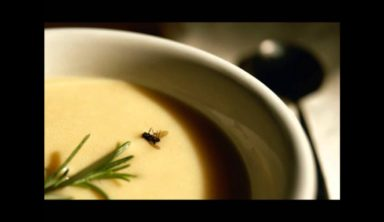 A FLY In the Soup
